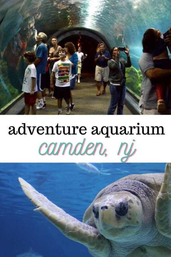two images one showing people walking around camden aquarium and one close up of a sea turtle with text overlay reading adventure aquarium camden NJ