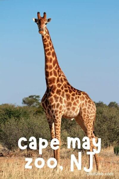 a giraffe in. a zoo with text overlay reading cape may zoo NJ