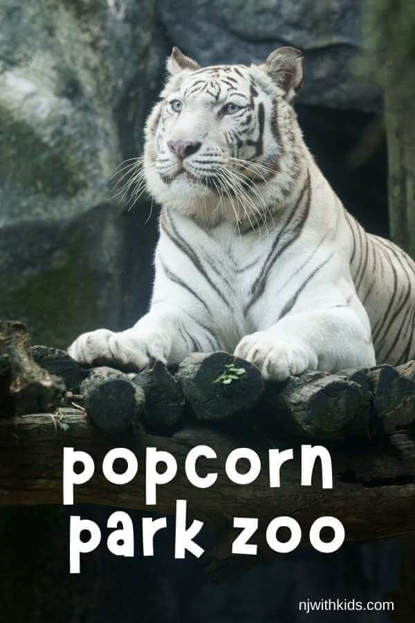 a white tiger ona rock with text overlay reading popcorn park zoo